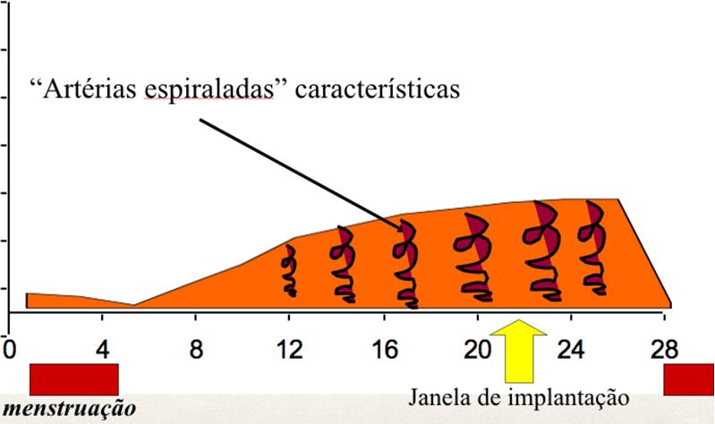 JANELA DE IMPLANTAÇÃO