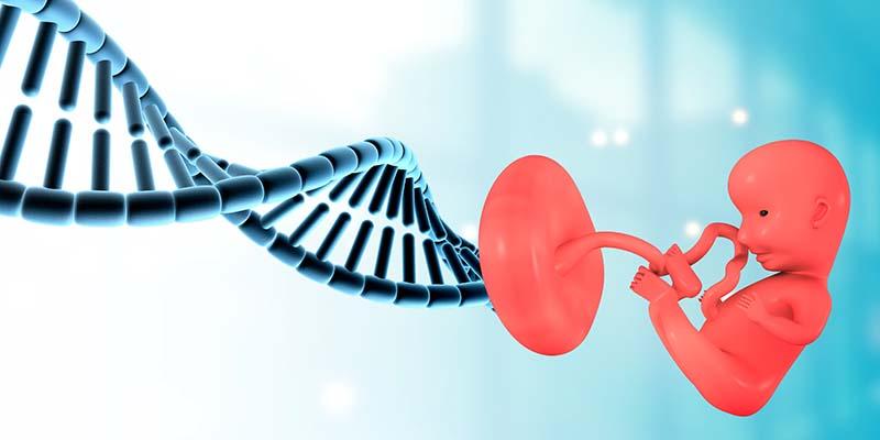 Epigenetica - Funcionamento